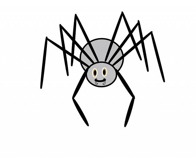 spider-213722_640